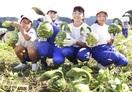 畑の恐竜 捕獲 勝山・児童がヒョウタン収穫