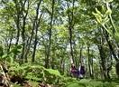 ブナ林、恵みの雨を受け緑深まる
