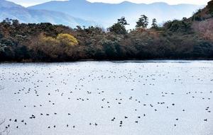 多くの野鳥が飛来している猪ケ池=福井県敦賀市明神町