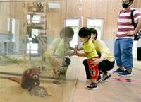 レッサーパンダ久しぶり 鯖江 西山動物園が再開 みんなで読もう