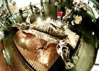 県立恐竜博物館20周年 「本物」展示 こだわり 充実へ 熱意で奔走 5新種発見 来館に拍車