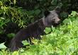 福井の山際、クマに襲われ男性負傷