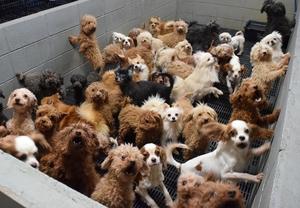 コンクリートブロックのマスに入れられた犬=2017年12月、福井県坂井市内(県内動物愛護グループ提供)