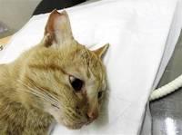 一代限りの命見守る 猫TNR活動 避妊去勢し地域に戻す ペットと生きる ブームの裏で(3)