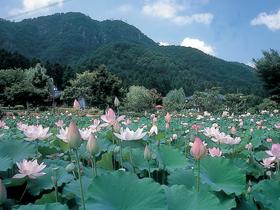 世界の花はす108品種が鑑賞できる