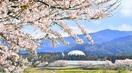 銀の卵抱く春景色 一桜一絵2020ふくい
