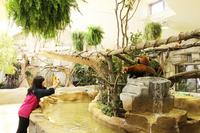 屋内新施設「アジアの森」オープン