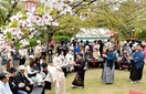 茶席、新緑と桜の下で 福井・足羽山 13流派が…