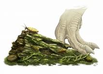 ゴキブリ化石3新種を勝山で発見