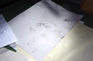 クマの足跡や爪跡が残った原紙=10月13日、福井県越前市新在家町