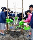 復興願い「宇宙桜」植樹、宮城