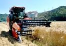 小浜でスマート農業実証、大麦収穫
