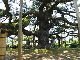 東西24メートル 名木の誉れ