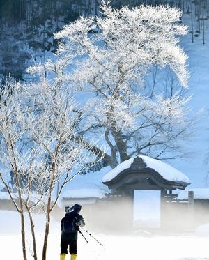 氷点下の自然美、福井に「霧氷」