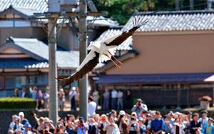 住民らが見守る中、大空へ飛び立つコウノトリのげんきくん=昨年10月、福井県越前市菖蒲谷町