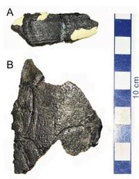 国内初発見のカメ類化石(2001年) 大陸の恐竜存在示唆 福井モノ語り