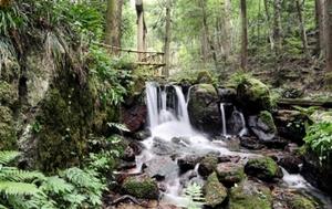 山あいの岩間から湧き出る瓜割の滝=福井県若狭町天徳寺