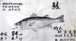 新海さん=福井市=が釣ったスズキの魚拓