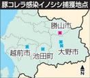 豚コレラ、勝山で感染イノシシ確認