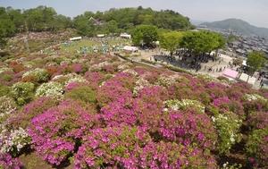 2019年5月のさばえつつじまつりの会場=福井県鯖江市西山公園
