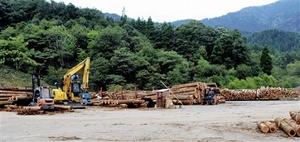 山の間伐材や端材の買い取りが行われるウッド・ターミナル美山=福井市朝谷町