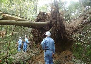 台風21号の影響で、根元から倒れた樹木=大阪府交野市の大阪市立大理学部付属植物園(同大提供)