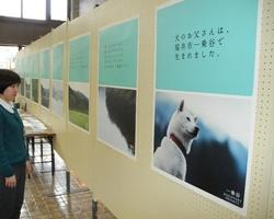 白い犬のお父さんは一乗谷朝倉氏遺跡をPRする観光イメージアップポスターにも起用された=2015年4月に福井市役所で開かれたポスター展から