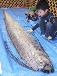「深海魚出現で大地震」は迷信