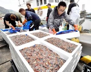 ホタルイカ漁が越前町で最…