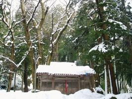 水間神社のケヤキ=福井県越前市室谷町(2006年1月撮影)
