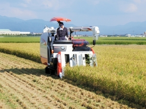コシヒカリを収穫する農家=福井県坂井市
