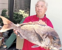 松本さんが雄島で釣った82センチのマダイ