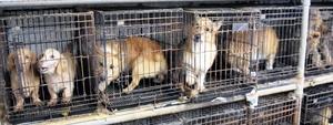 狭いケージに1、2匹の犬が押し込められ、ほえたり、ぐるぐる回ったりしていた=2017年12月、福井県坂井市内(県内動物愛護グループ提供)