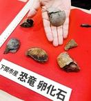 下関で発見の化石は日本初の恐竜
