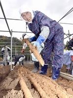 ジネンジョの出来栄えに笑顔の生産者=11月19日、福井県おおい町名田庄井上