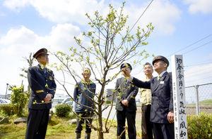 「令和」記念し敷地に梅植樹