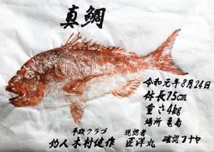 木村さん(福井市)が亀島で釣ったマダイの魚拓