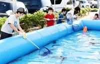 タイ捕まえ「大きい!」 若狭町で催し 児童、プールで満喫