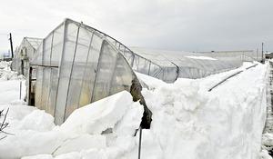 大雪で農業ハウス130棟…