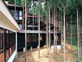 杉林の中、浴室・宿泊施設が並ぶ。森林浴と温泉が楽しめる