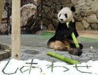 七夕、パンダにササ飾りの贈り物