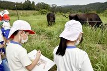 萩野小児童が放牧牛の写生に挑戦