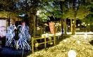 「良縁の樹」最後の輝き LED5万個彩る