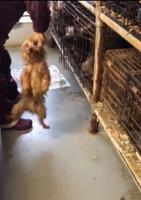 日本動物福祉協会が新たに公開した動画の一場面。犬の首根っこをつかんでいる(同協会提供)