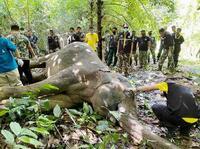 ゾウの死骸に大量プラごみ、タイ