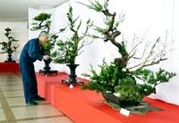 古木の枝で自然美表現 「上野古典立華」を伝承 南越前できょう、あす