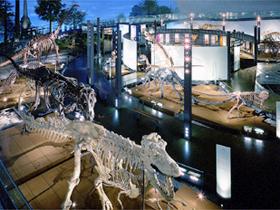 「恐竜王国」福井の代表施設。30体以上の恐竜全身骨格は圧巻