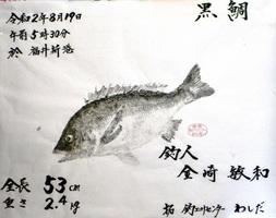 金崎さん(坂井市)が釣ったチヌの魚拓