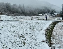 雪が積もった福井県福井市の山間部=12月9日午前6時45分ごろ、同市南西俣町