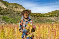 Sinopecの「Fixed-point Poverty Alleviation and Pairing Program」が8県を貧困から解放